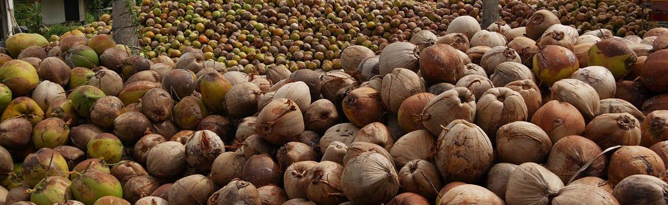 farine-de-coco-biologique-bertrand-min